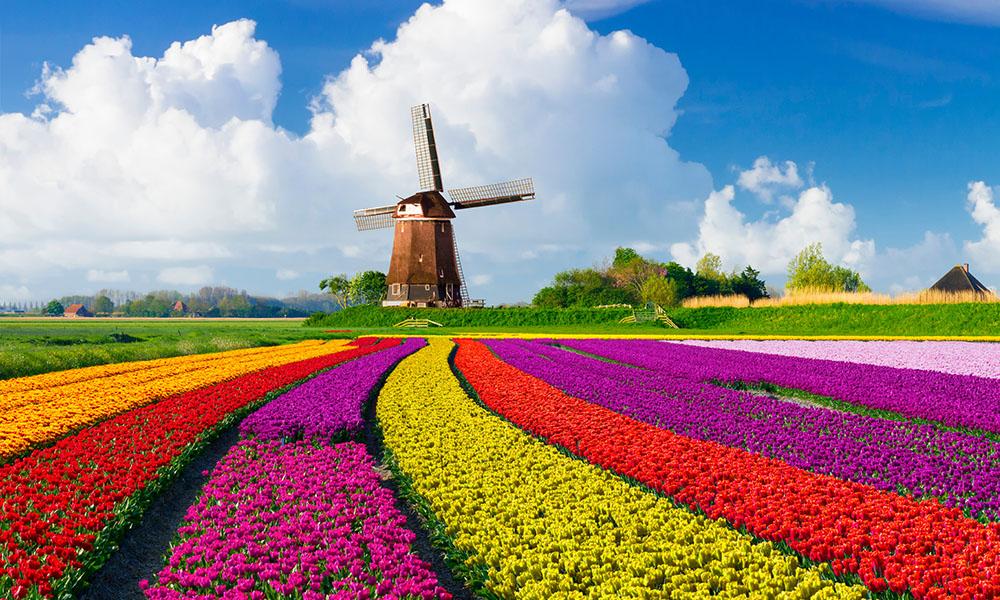 STUDY IN NETHERLANDS